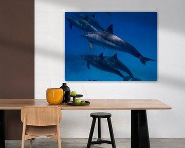 Dolfijn van Michael Rust
