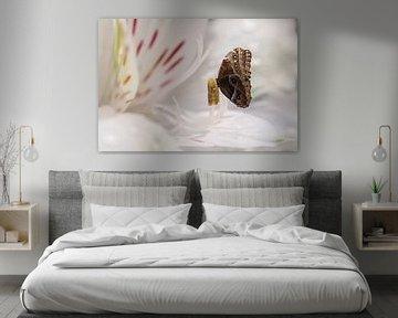 Papillon hibou sur Elianne van Turennout