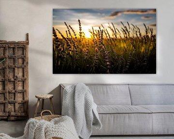 Lavendelfeld bei Sonnenuntergang von Cynthia Hasenbos