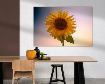 Sonnenblume von Gert Hilbink
