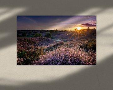 Blühende Heide des Sonnenuntergangs von Pieter van Dieren (pidi.photo)