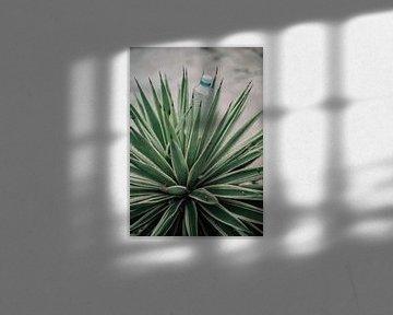 Water plant von Marieke Gras