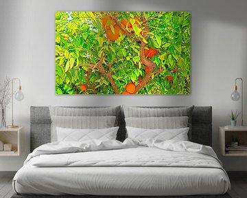 Orangenbaum von Leopold Brix