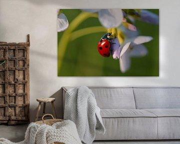 Lieveheersbeestje in rust von Anne Jacobs