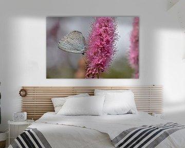 Vlinder op roze bloem von Kim de Been