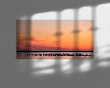Europese flamingo's bij zonsondergang sur Jacques van der Neut