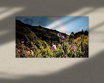 wondermooie wildgroei opTenerife met regenboog in blauwe lucht von Willy Van de Wiele
