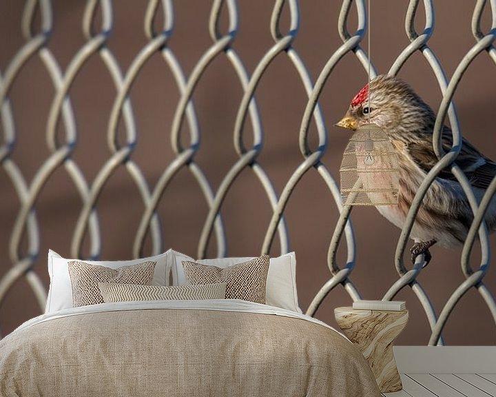 Sfeerimpressie behang: Grote Barmsijs (Acanthis flammea) van Marcel Pietersen