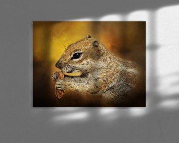 Portret Van Een Lief Eekhoorntje van Diana van Tankeren