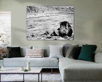 Lion von melissa demeunier