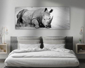 Rhino von melissa demeunier