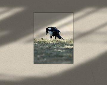 bird von melissa demeunier