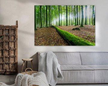 Beech Forest in Germany van Martin Wasilewski