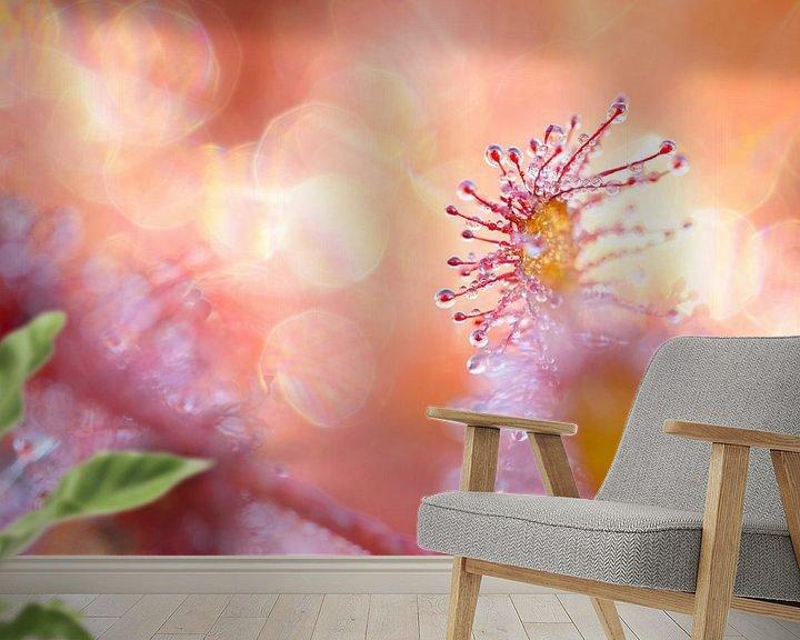 Sfeerimpressie behang: Zonnedauw in het eerste ochtendlicht van Jos Pannekoek