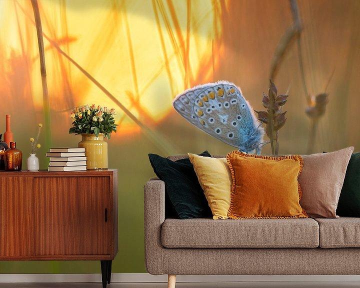 Sfeerimpressie behang: Icarusblauwtje in de ondergaande zon. van Jos Pannekoek