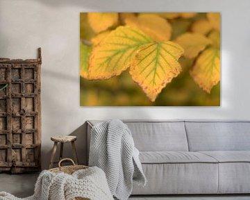 Herbstlaub in gelb - grünen Farben von Marianne Twijnstra-Gerrits