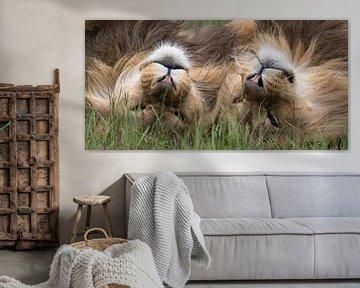 Leeuwen aan het dollen van richard evers
