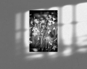 Weiße Blumen von Barbara Koppe