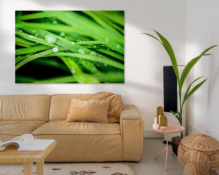 Sfeerimpressie: Waterdruppels op het gras van Barbara Koppe