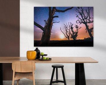 Zie de maan schijnt door de bomen van Fotografiecor .nl