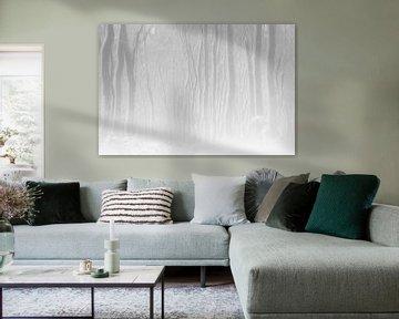 White Forest von jowan iven