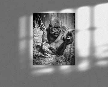 Gorilla jong von kees spel