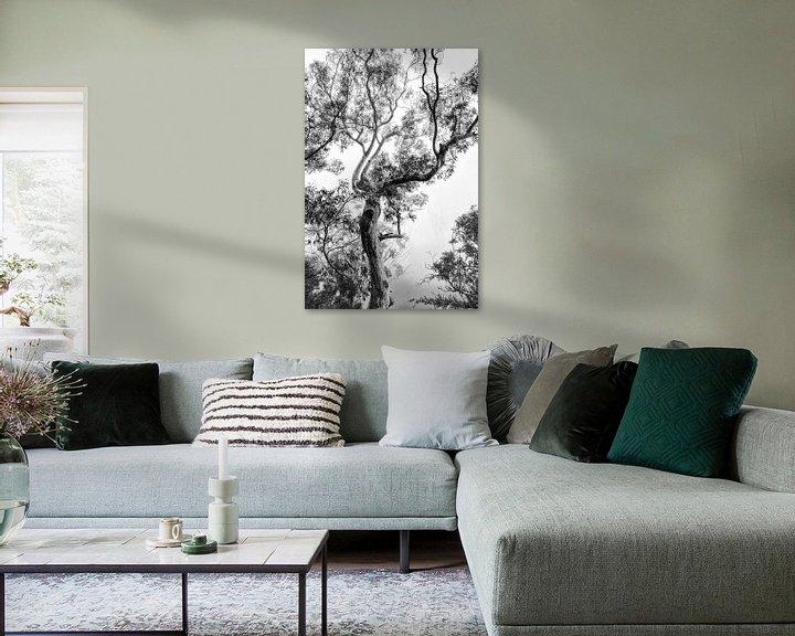 Sfeerimpressie: Regenwoud in de mist van Ines van Megen-Thijssen