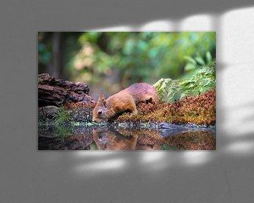Eekhoorn von Yvonne Hoenen