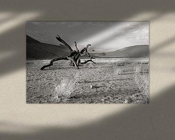 verstilde boom nabij dune 7 (Sosusvlei) in Namibië von Jan van Reij