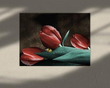 Lady Bug auf Tulpen von Harald Fischer