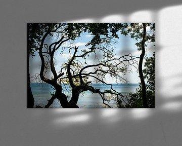 uitzicht op zee gezien door een oude grillige boomstronk van Hanneke Luit