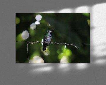Groene kolibrie. Mindo, Ecuador von Tom Hengst