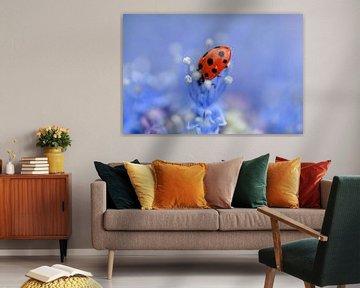 Lieveheersbeestje op paarse bloem von Kim de Been