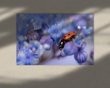 Lieveheersbeestje op paarse bloem van Kim de Been