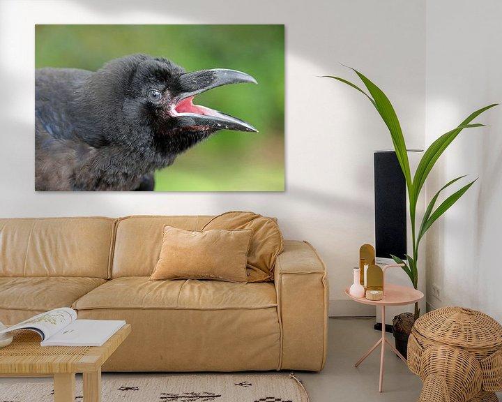Beispiel: Corvus corax von Edwin Butter