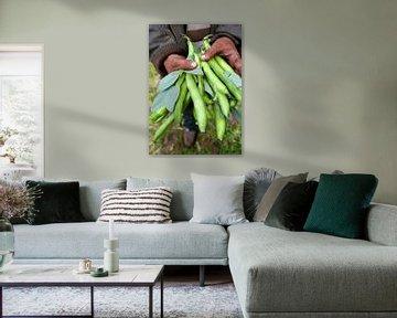 groenten0477 van Liesbeth Govers voor omdewest.com