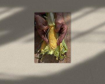 mais0209 van Liesbeth Govers voor omdewest.com
