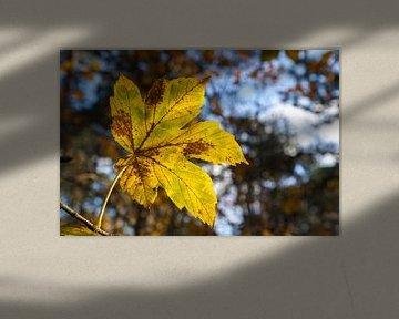 Feuille d'automne au soleil sur Nel Diepstraten