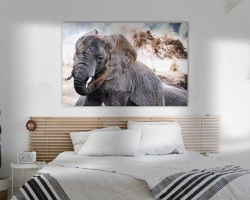 african elephant throws sand, wildlife van W. Woyke