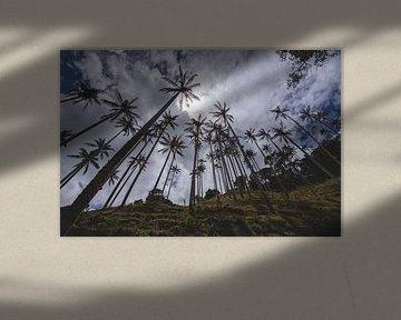 Waxpalmbomen onderaan de heuvel sur Ronne Vinkx