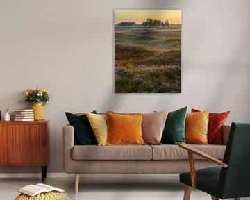 Sonnenaufgang über einer schönen blühenden Heide von Jos Pannekoek