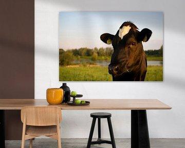 Cow von Joke Absen
