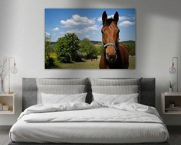 Horse van Joke Absen