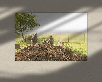 Mistige ochtend een boerenerf