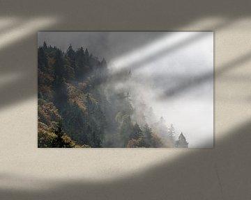 Nebelwald von Michael Valjak