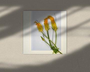 Botanica V Cucurbita van Niek van Schie