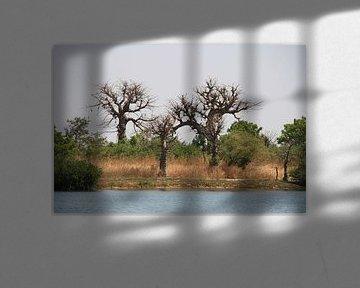 Baobabs von Mr Greybeard