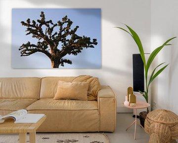 Baobab von Mr Greybeard