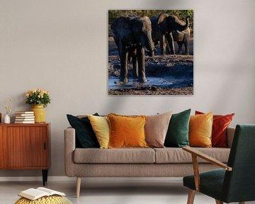 Badende olifanten bij een waterpoel sur Arthur van Iterson