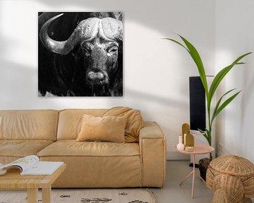 Porträt eines Büffels. von Arthur van Iterson